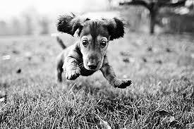 peepo the dog