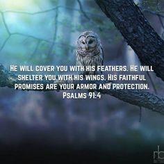 Psalm91v4