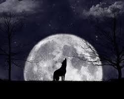 moon barking
