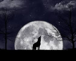 moon barking